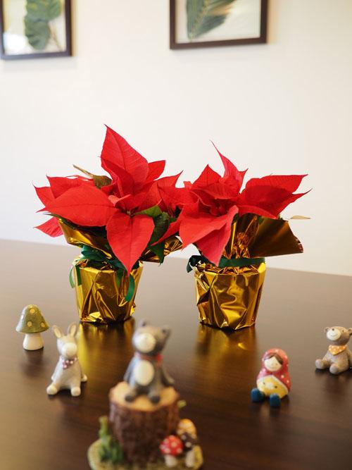 クリスマス・ポインセチア